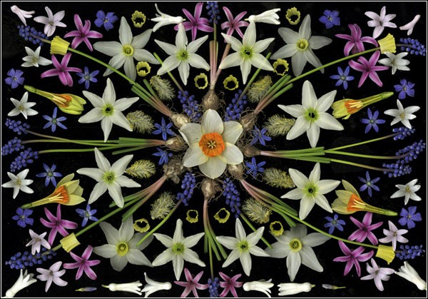 цветочные мандалы2